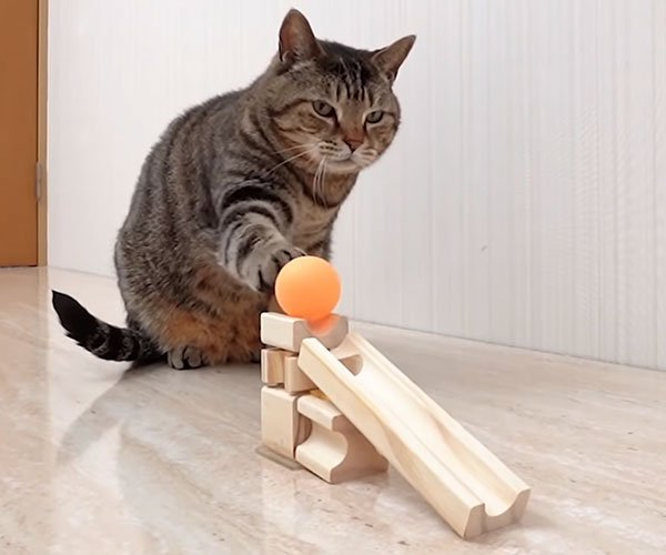 Cat Ping Pong Trick Shots
