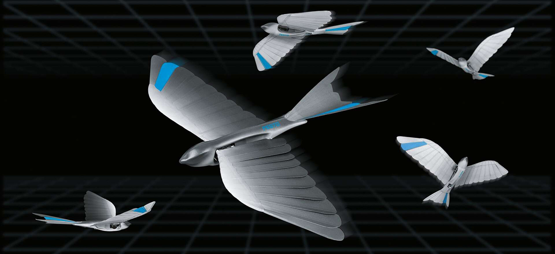 Festo BionicSwift Bird Robot