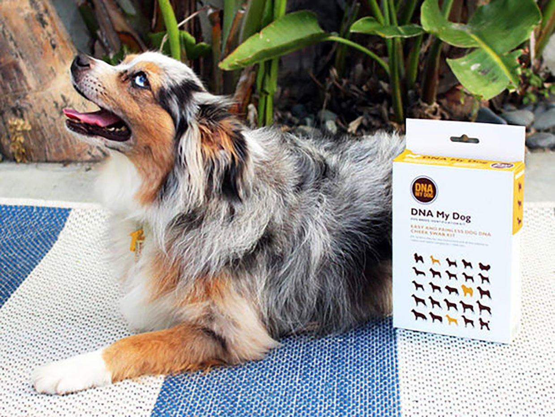 DNA My Dog Breed Identification Test + Dog Training Bundle