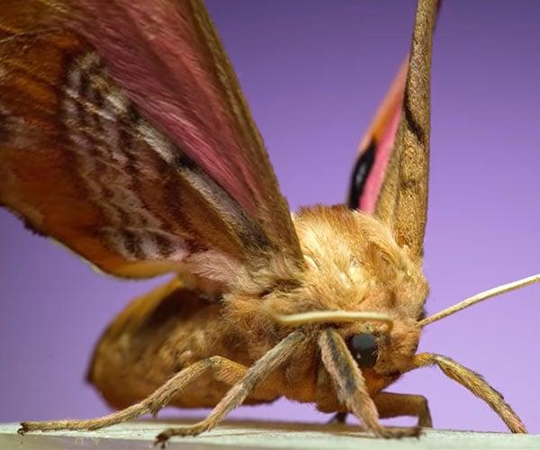 Moths in Ultra Slow-Motion