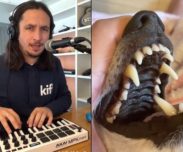 The Kiffness x La La La Dog